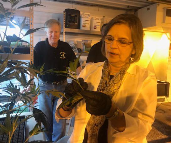 "April 13, 2018 – Assemblywoman Lupardo examines an industrial hemp ""clone"" at a Broome County farm."